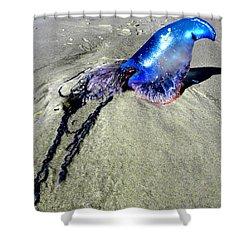 Beached Jellyfish 000 Shower Curtain