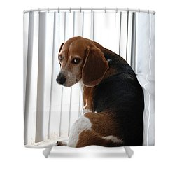 Beagle Attitude Shower Curtain by Jennifer Ancker
