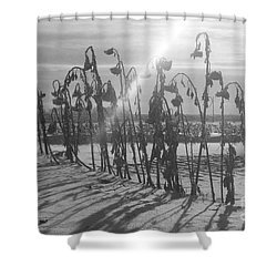 Beam Of Light Shower Curtain by Mary Mikawoz