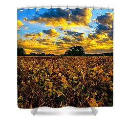 Bean Field Splendor  Shower Curtain