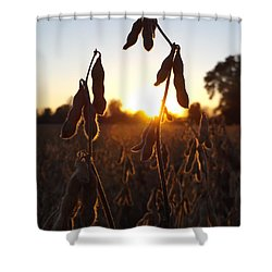 Beans At Sunset Shower Curtain