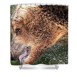 Bear Bath Shower Curtain