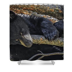 Shower Curtain featuring the photograph Bear Cub 2 by Mitch Shindelbower