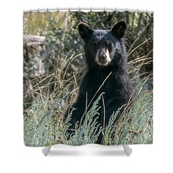 Bear Cub At Waterton Canyon Shower Curtain