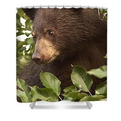 Bear Cub In Apple Tree1 Shower Curtain