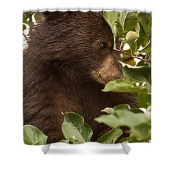 Bear Cub In Apple Tree3 Shower Curtain