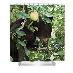 Bear Cub In Apple Tree5 Shower Curtain