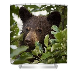 Bear Cub In Apple Tree6 Shower Curtain