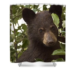Bear Cub In Apple Tree7 Shower Curtain