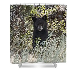 Shower Curtain featuring the photograph Bear Cub Looking For Mom by Stephen  Johnson