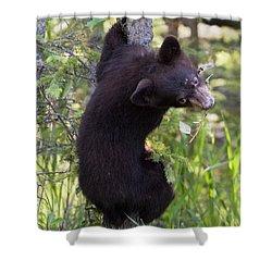 Bear Cub On Tree Shower Curtain