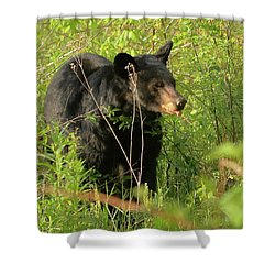 Shower Curtain featuring the photograph Bear In The Grass by Coby Cooper