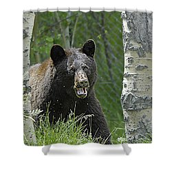 Bear In Yard Shower Curtain