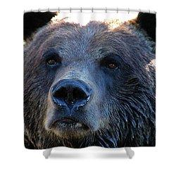 Bear On Grouse Shower Curtain