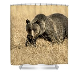 Bear On The Prowl Shower Curtain