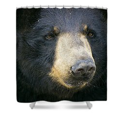 Shower Curtain featuring the photograph Bear With Me by Cheri McEachin