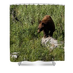 Bear1 Shower Curtain
