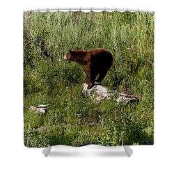 Bear2 Shower Curtain