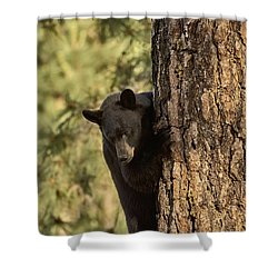 Bear3 Shower Curtain
