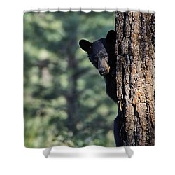 Bear4 Shower Curtain