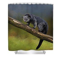 Bearcat Shower Curtain