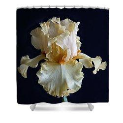 Bearded Iris 3 Shower Curtain