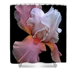 Bearded Iris Shower Curtain by Dave Mills