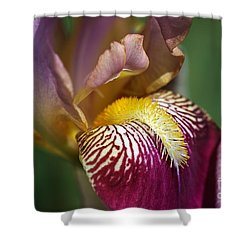 Bearded Iris Flower Mary Todd Shower Curtain by Joy Watson