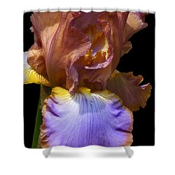 Shower Curtain featuring the photograph Bearded Iris With Black Background by Kerri Ligatich