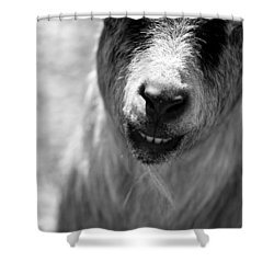 Shower Curtain featuring the photograph Beardy Smiley by Angela Rath