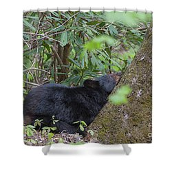 Bearly Awake Shower Curtain
