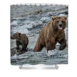 Bears Being Watchful  Shower Curtain