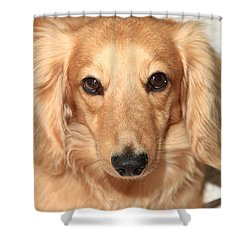 Beau Shower Curtain