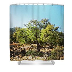 Argan Tree Shower Curtain