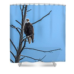 Shower Curtain featuring the photograph Beautiful Bald Eagle by Robert Bales