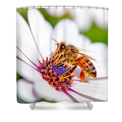Beautiful Bee On Daisy Shower Curtain