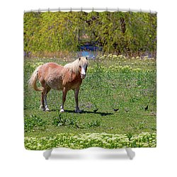 Beautiful Blond Horse And Four Little Birdies Shower Curtain by James BO Insogna