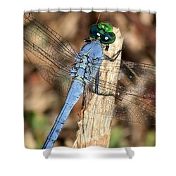 Beautiful Blue Eyes Shower Curtain by Carol Groenen