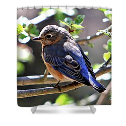 Beautiful Blue Shower Curtain by Marle Nopardi