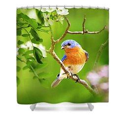 Beautiful Bluebird Shower Curtain by Christina Rollo