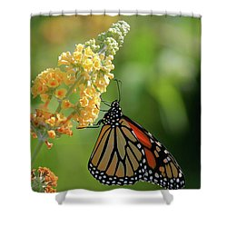 Beautiful Butterfly Shower Curtain by Karol Livote