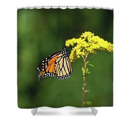 Beautiful Combination Shower Curtain