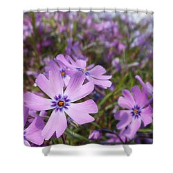 Beautiful Creeping Purple Phlox Shower Curtain