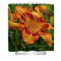 Shower Curtain featuring the photograph Beautiful Daylily by Sandy Keeton