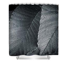 Beautiful Detail Shower Curtain