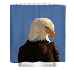Shower Curtain featuring the photograph Beautiful Eagle by Jeff Swan