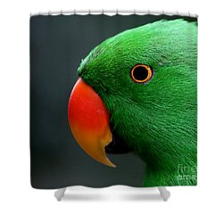 Beautiful Eclectus Parrot Shower Curtain