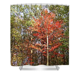 Shower Curtain featuring the photograph Beautiful Fall Colors  by Irina Sztukowski