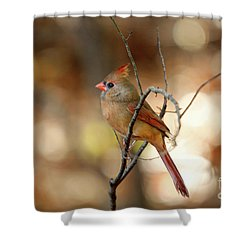 Shower Curtain featuring the photograph Beautiful Female Cardinal by Darren Fisher