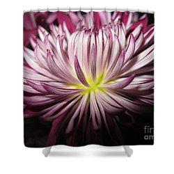 Beautiful Flower Shower Curtain
